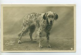 CHIENS 403 Chien BLUE PRINCE Setter Anglais  -1904  CARTE PHOTO Paul BOYER Photographe - Hunde