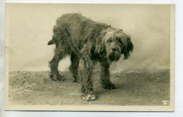CHIENS 409 Chien Griffon D'arret DIAVOLO   -1904  CARTE PHOTO Paul BOYER Photographe - Dogs