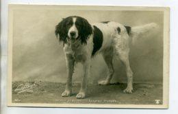 CHIENS 411 Chien Epagneul Francais MEDOR DE SAUVIC  -1904  CARTE PHOTO Paul BOYER Photographe - Hunde