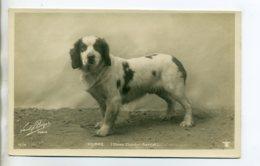 CHIENS 413  Chien De  Chasse  POMME Clumber Spaniel   -1904  CARTE PHOTO Paul BOYER Photographe - Hunde