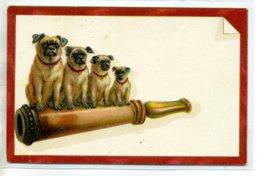 CHIENS 539 Chiens Bouledogues Sur Le Fumer Cigarette 1910 - Chiens