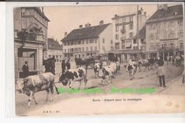 Suisse Fribourg Bulle Depart Pour La Montagne Vaches Troupeau - FR Fribourg