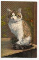 CHATS 0051  Portrait Chat  Blanc Et Rous Illustrateur No 56 Edit Stehli Suisse - Cats
