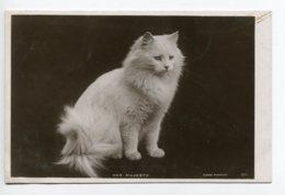 "CHATS 0060 Tirage Carte Photo "" Her Majesty "" Chat De Race  Beau Pelage Blanc Rotary Photo Ec 570 - Cats"