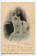 CHATS 0062  Portrait De Chat Sur Le Coussin Vert écrite 1904 Serie 47 Clement Tournier Geneve - Cats
