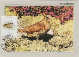 Portugal Acores Carte Maximum Oiseaux 1988 Bécasse 382 - Azoren