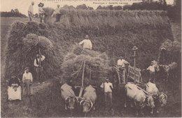 LE MIDI PITTORESQUE  :  La Récolte De Blé En Gascogne . - Cultures