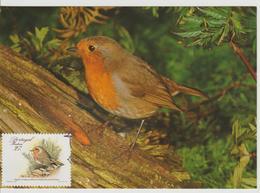 Portugal Madère Carte Maximum Oiseaux 1988 Rouge Gorge 125 - Madère
