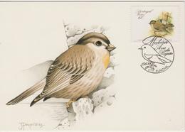 Portugal Madère Carte Maximum Oiseaux 1988 Petronia 126 - Madère