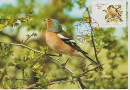 Portugal Madère Carte Maximum Oiseaux 1988 Pinson 127 - Madère