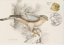 Portugal Madère Carte Maximum Oiseaux 1988 Epervier 128 - Madère