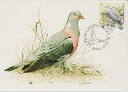 Portugal Madère Carte Maximum Oiseaux 1991 Pigeon 151 - Madère