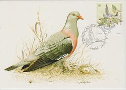 Portugal Madère Carte Maximum Oiseaux 1991 Pigeon 153 - Madère