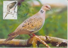 Portugal Madère Carte Maximum Oiseaux 2002 Tourterelle 227 - Madère