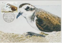 Portugal Madère Carte Maximum Oiseaux 2004 Oiseau Océanite Frégate 237 - Madère