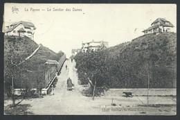 +++ CPA - DE PANNE - Sentier Des Dunes    // - De Panne