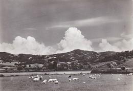 TIRANA,ALBANIA POSTCARD (C644) - Albanie