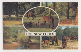 AJ95 The New Forest Multiview - Ponies - England
