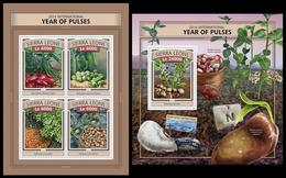 Sierra Leone 2016, Year Of Pulses, Klb + S/s MNH - Alimentation