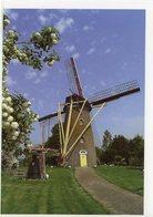 HOEDEKENSKERKE - Borsele (Zeeland) - Molen/moulin - Prachtige WENSKAART Incl. Envelop Van De Koutermolen Met Bloesems - Pays-Bas