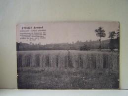 SORILLON-ABZAC (GIRONDE) L'AGRICULTURE. EYSSELY ARMAND. REPRODUCTEUR DE SEMENCES SELECTIONNEES...... - France