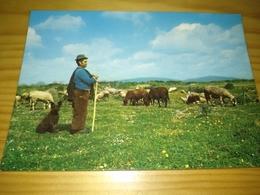"""Postal, Postcard,  """"O Pastor E Rebanho"""" Portugal - Douane"""