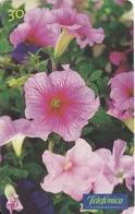 TARJETA DE BRASIL DE UNAS PETUNIAS  (FLOR-FLOWER-FLORES) - Flores