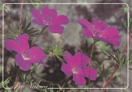 Flowers - Fleurs - Bloemen - Blumen - Fiori - Flores - Verikurjenpolvi - (Geranium Sanguineum) - WWF Panda Logo - RARE - Fleurs