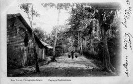 Paysage Cochinchinois - Viêt-Nam