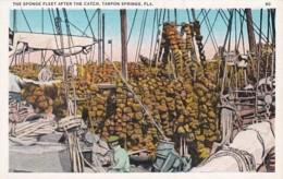 Florida Tarpon Springs The Sponge Fleet After The Catch - Etats-Unis
