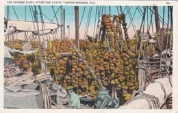 Florida Tarpon Springs The Sponge Fleet After The Catch 1924 - Etats-Unis