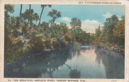 Florida Tarpon Springs The Beautiful Anclote River Curteich - Etats-Unis