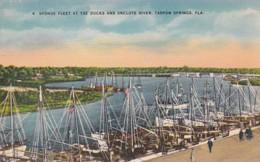 Florida Tarpon Springs Sponge Fleet At The Docks And Anclote River - Etats-Unis