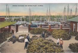 Florida Tarpon Springs Sponge Exchange And Sponge Fleet - Etats-Unis