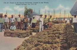 Florida Tarpon Springs Scene At The Sponge Exchange Largest In The World Curteich - Etats-Unis