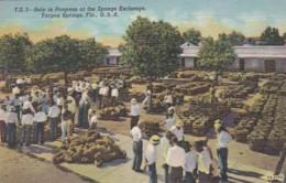 Florida Tarpon Springs Sale In Progress At The Sponge Exchange Curteich - Etats-Unis
