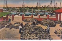 Florida Tarpon Springs Sponges And Sponge Boats - Etats-Unis