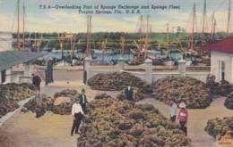 Florida Tarpon Springs Overlooking Part Of Sponge Exchange And Sponge Fleet Curteich - Etats-Unis