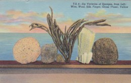 Florida Tarpon Springs Six Varieties Of Sponges 1957 Curteich - Etats-Unis
