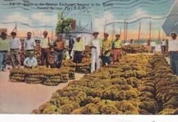 Florida Tarpon Springs Scene At The Sponge Exchange Largest In The World 1960 Curteich - Etats-Unis