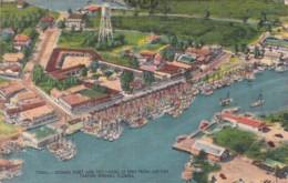 Florida Tarpon Springs Sponge Fleet And Exchange As Seen From Airliner 1957 - Etats-Unis