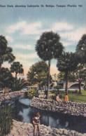 Florida Tampa Plant Park Showing Lafayette Street Bridge 1960 - Tampa