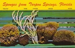 Florida Tarpon Springs Five Varieties Of Sponges - Etats-Unis