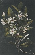 8231.   Da Roma Per Silvi Marina 1907  - Small Format FP - Fleurs