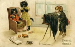 Carte Postale Ancienne Le Chien Photographe Et Les Chats 1925 - Old Paper