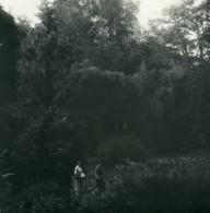 Italie Lac Majeur Isola Madre Bambous Ancienne Photo Stereo Possemiers 1900 - Photos Stéréoscopiques