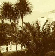 Italie Lac Majeur Pallanza Eden Hotel Jardins Ancienne Photo Stereo Possemiers 1900 - Stereoscopic