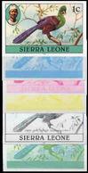 SIERRA LEONE 1980 Bird Turaco 1c Imprint 1981 1c Wmk CA PROGRESSIVE PROOFS:6 - Coucous, Touracos