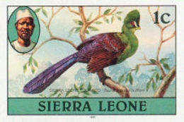 SIERRA LEONE 1980 Turaco Birds 1c Impr.1981 Wmk CA IMPERF - Coucous, Touracos