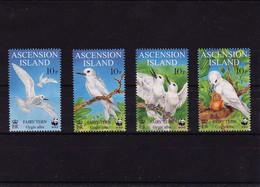 1999 Ascension Birds Full Set MNH - Ascension (Ile De L')